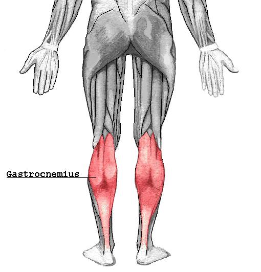 I Punti Trigger del Gastrocnemio sono essenzialmente di due tipi. c8f70c7b607